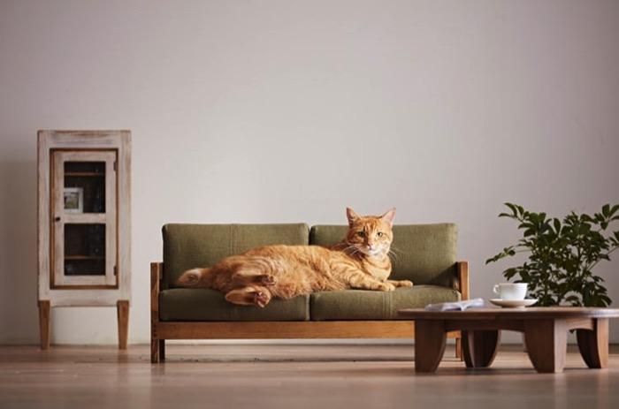人間の家具をそのまま猫用に小さくした「ネコ家具」