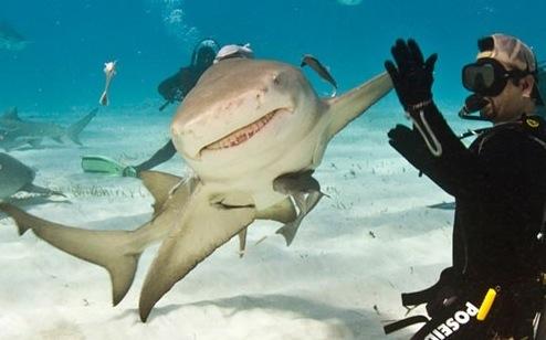 shark_highttouch.jpg