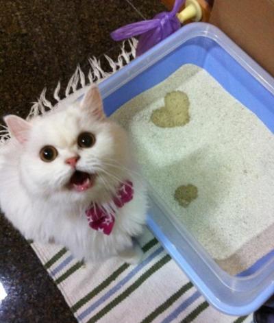 Cat heart osikko