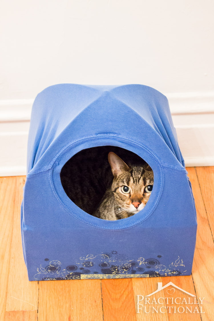 DIY Cathouse 04